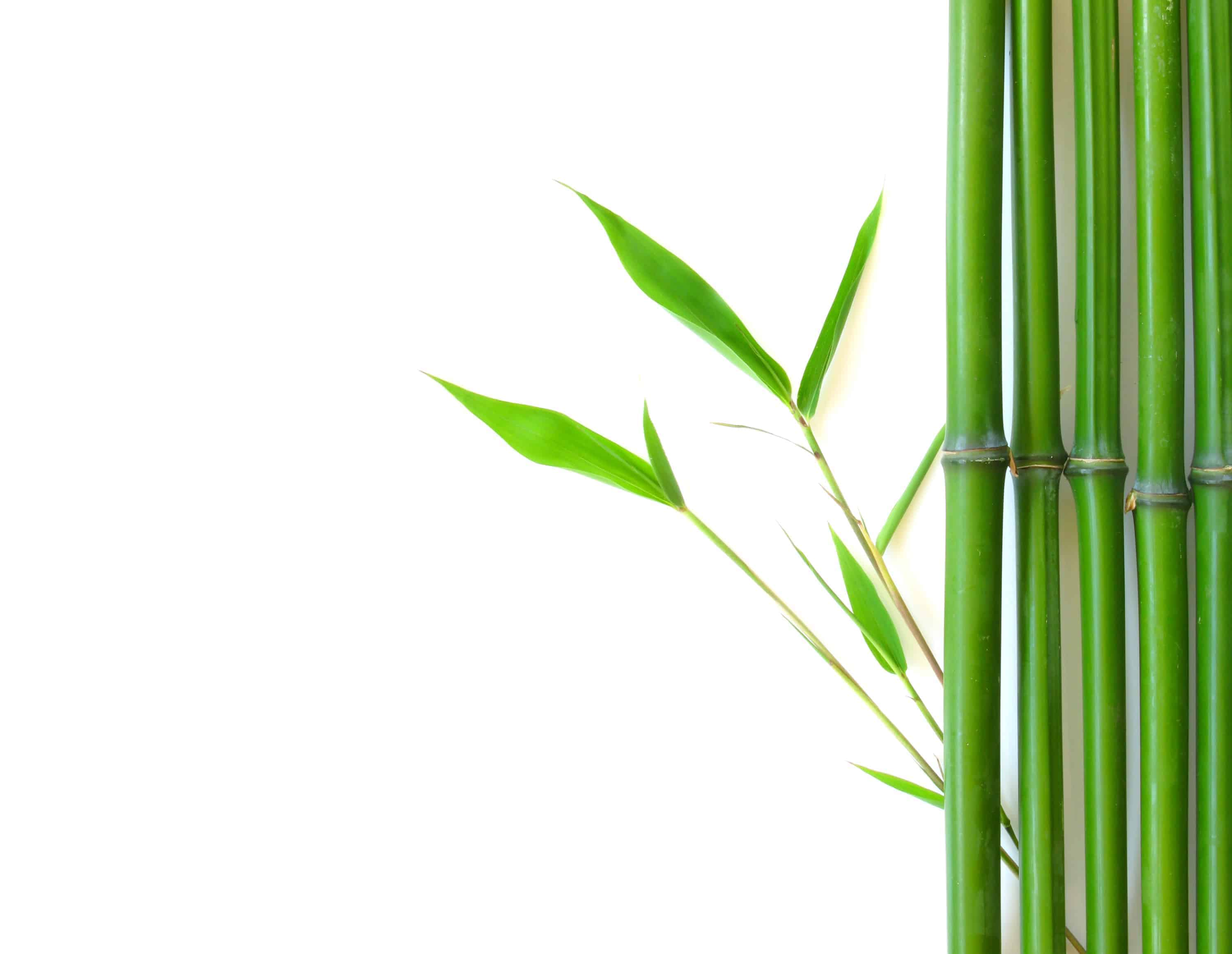 Bamboo With Roots Clipart The Of And To That